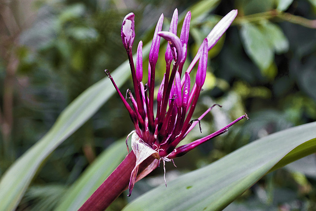 Floral Pyrotechnics – Brooklyn Botanic Garden, New York, New York