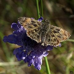 Ma fleur/Mon papillon