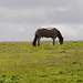 Horizon horses