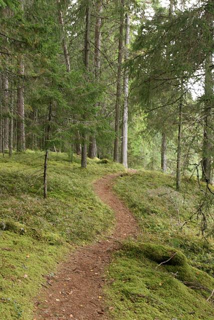 Sellised rajad mulle meeldivad / Forest path