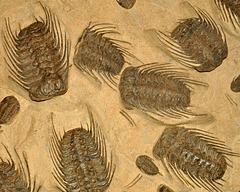 ROM Trilobites Dec 2016 DSC 2379