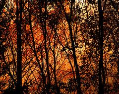 IMG 5307 - Autumn colours