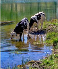 Sauze d'Oulx : dissetarsi al lago di Laune - (734)