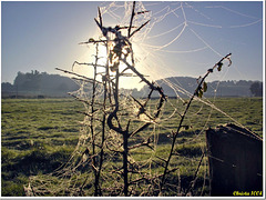 Land Art: spider web in the morning