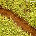 22 Leaf-cutter Ant Run