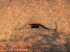 Dachfenster - Einflug für Schleiereulen