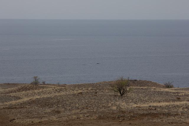 Da schwimmt ein Wal vorbei