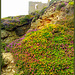 Wheal Coates tin mine ruins