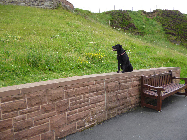 BDD - Whitehaven Walkies Wall