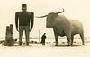 Paul Bunyan and Babe the Blue Ox, Bemidji, Minnesota
