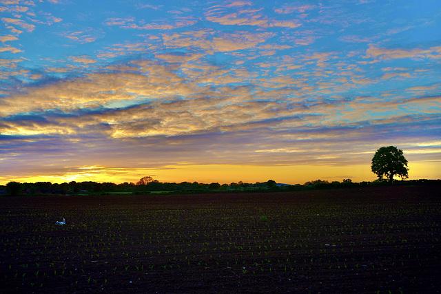 Gnosall sunset