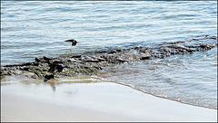 la mer et les hirondelles