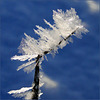 Icy Needles...