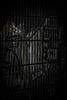 dark fence