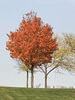 peak season for color