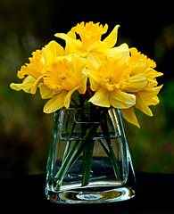 Die letzten Osterglocken - The last daffodils