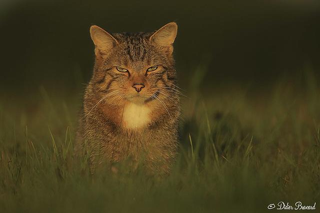 chat roupille presque