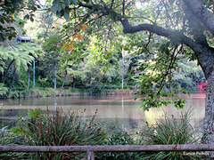 In Pukekura Park, New Plymouth