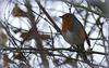 Robin des bois.... :-)