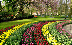 Keukenhof, Lisse, The Netherlands...