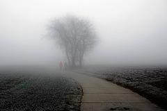 Ein Spaziergang ins Nebelgrau - A walk into the mist grey