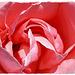Joyeuse fête des mères à toutes les mamans d'iper @++