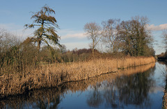 Larch and Reeds