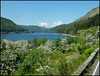 Thirlmere in may