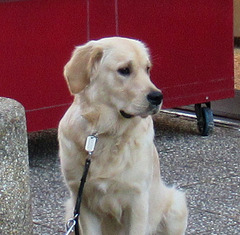UN TOUTOU PATIENT / A PATIENT DOG
