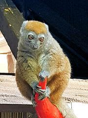 Image de Madagascar