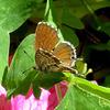 Enfin un papillon / At Last a butterfly!