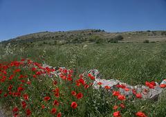 Landscape near Módica