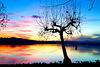Ogni ferita guarirà, e sorgerà un albero ...