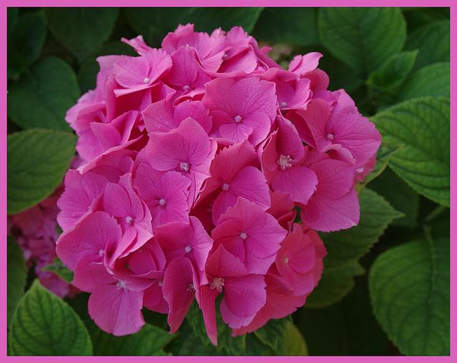 Bouquet d'été !
