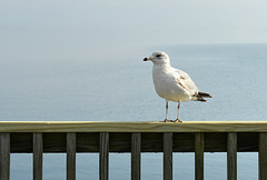 "Mr. Seagull Says, ""HFF"""