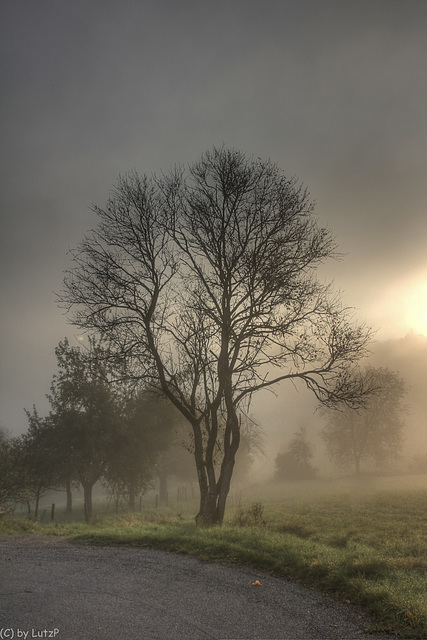 The Light of Fall - Herbstmorgen (125°)