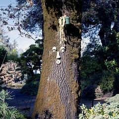 Wise Oak