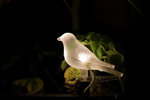Leuchtvogel
