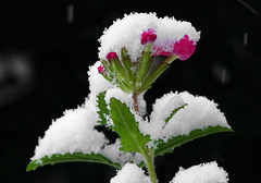 Der erste Schnee
