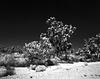 Mojave Grandeur