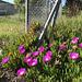 Succulent Fence