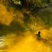 Autumn Duck