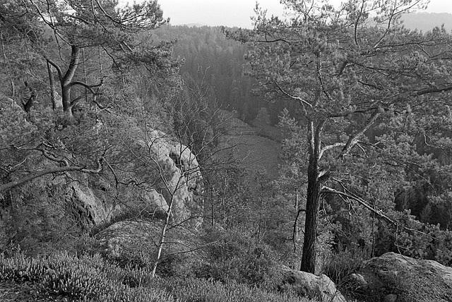 Sachsen Rocks XI