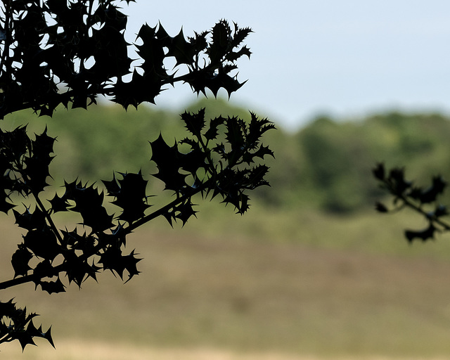 New Forest - Details