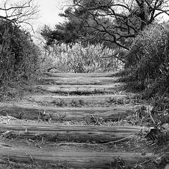 Log steps