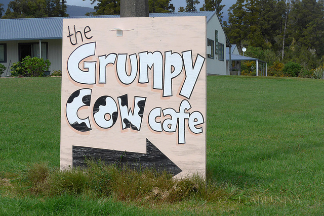 The Grumpy Cow