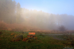 A seat in the mist
