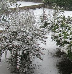 DE LA NEIGE AUJOURD'HUI/SOME SNOW TODAY