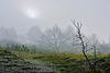 Seltsam, im Nebel zu wandern ... Strange, to wander in the mist ...