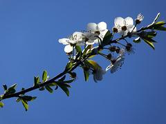 bleu printemps